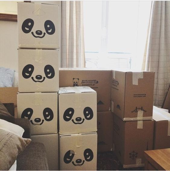 Casa vecchia invasa dai panda